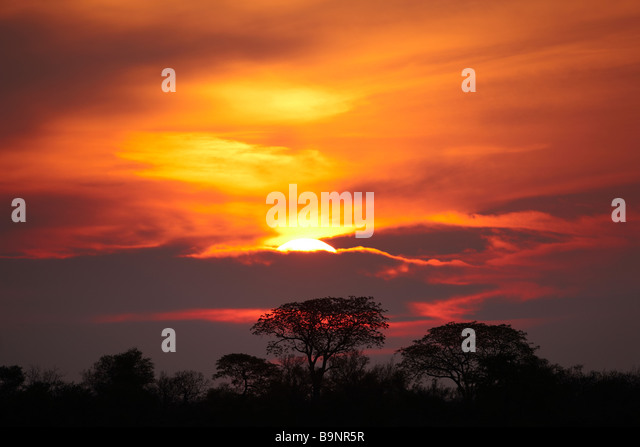 silhouette of mopane trees at sunset, Kruger National Park, South Africa - Stock Image