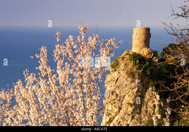 Mallorca historic lookout tower at the west coast Mirador de Ses Animes almond blossom - Stock Image