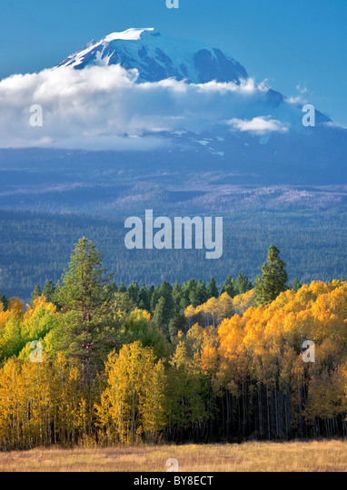 Mt. Adams with fall colored aspens as seen from Conboy Lake National Wildlife Refuge, Washington - Stock-Bilder