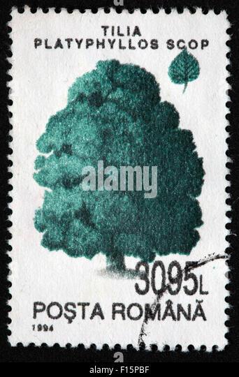 1994 Posta Romana tree 3095L Tilia Platyphyllos Scop pine Stamp - Stock Image