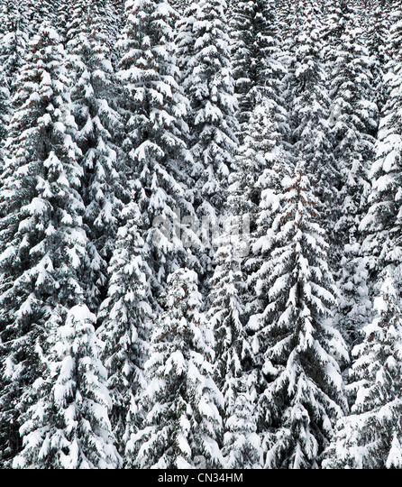 Snow covered trees,Grand Massif, French Alps - Stock Image