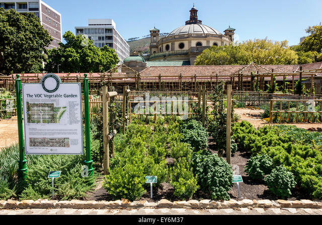 South Africa African Cape Town City Centre center Government Avenue The Company's Garden public park Table Mountain - Stock Image