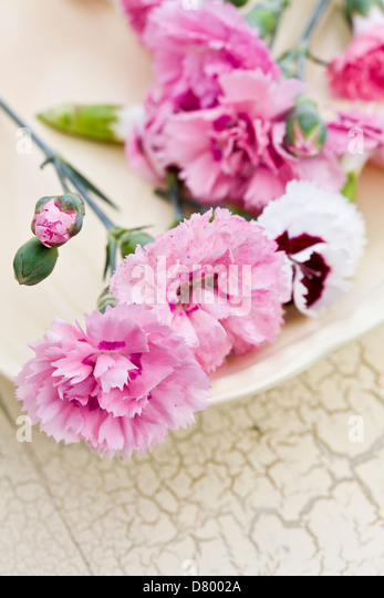 Pink and white edible Dianthus flowers on a white plate. - Stock Image