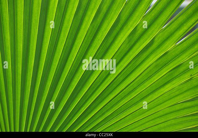 Fresh green leaf - Stock Image