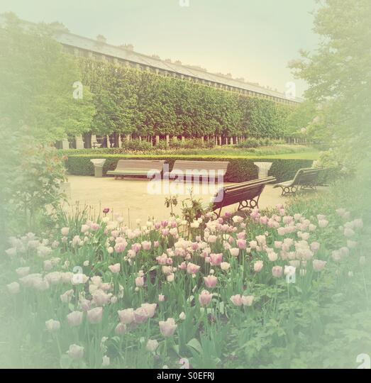 Pink tulips and benches at park Jardin du Palais-Royal in Paris, France. Warm, retro, faded look. - Stock Image