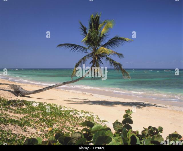 The Dominican Republic, Punta Cana, palm, beach, sea - Stock Image