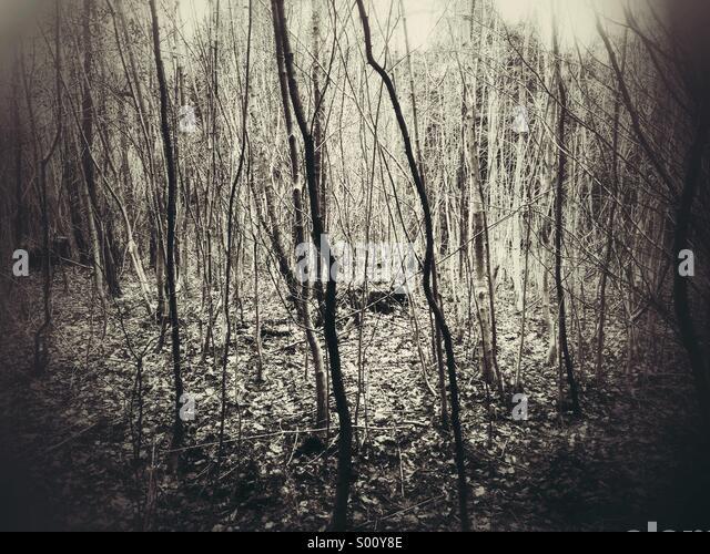 Winter woodland - Stock-Bilder