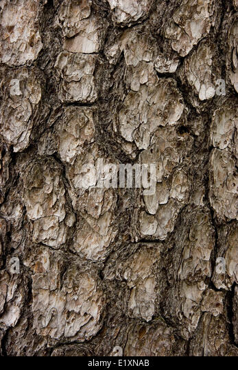 textural bark - Stock Image