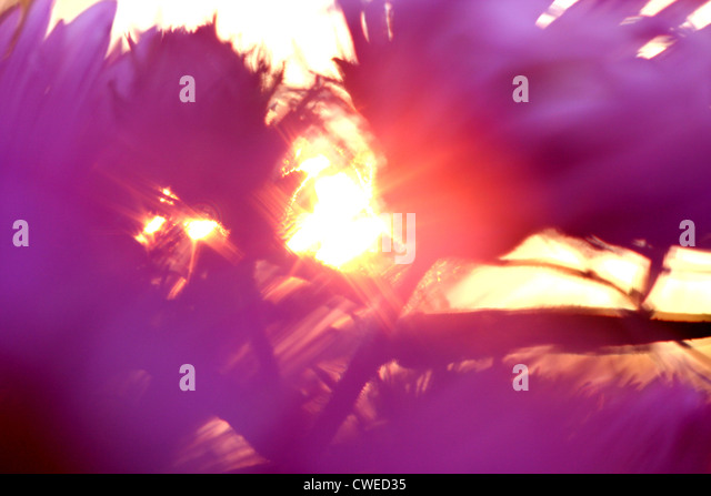 blurred motion,sun,flower - Stock-Bilder