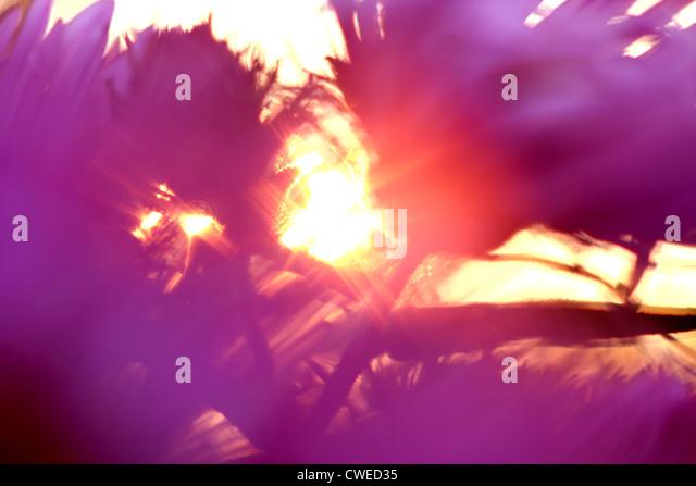 blurred motion,sun,flower - Stock Image