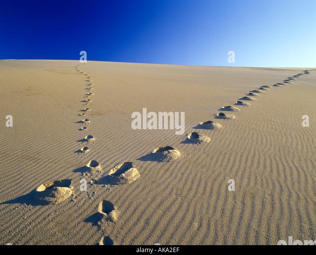 M00403M tiff Footprints up sand dune Oregon Dunes National Recreational Area Oregon - Stock Image