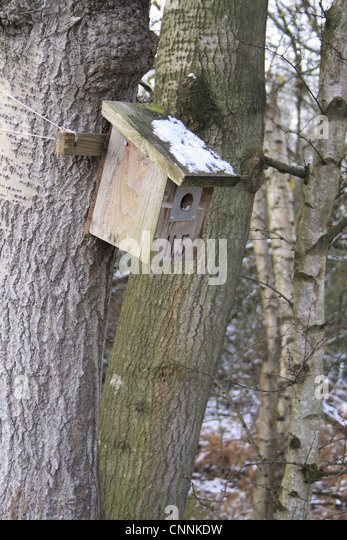 Birdbox winter stock photos birdbox winter stock images for What is a tree trunk covered with 4 letters