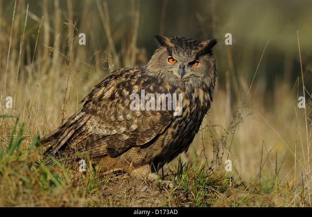 sex owl erotikhotel baden württemberg
