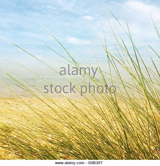 Grass on the beach by the sea - Stock Image