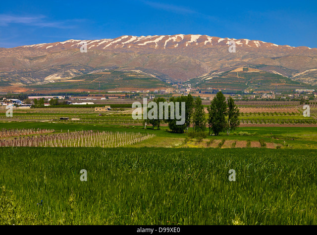 Beqaa Valley with Lebanon Mountains near Ksara, Lebanon, Middle East - Stock Image