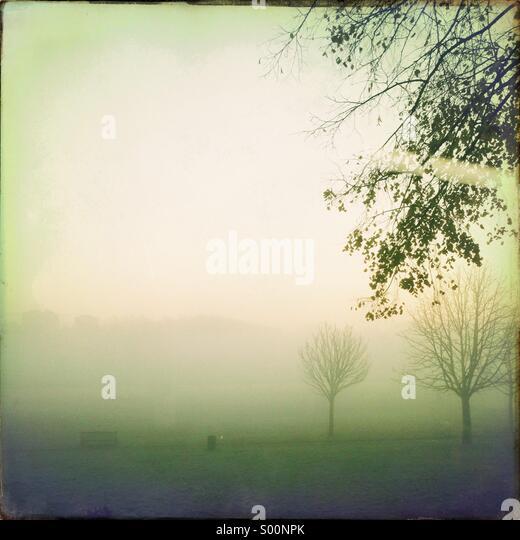 Trees in fog - Stock-Bilder