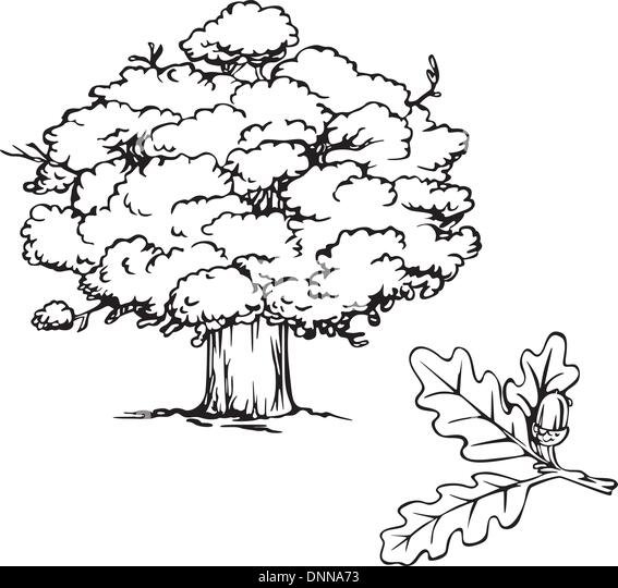 Oak tree and branch with acorn. Black and white vector illustration. - Stock Image