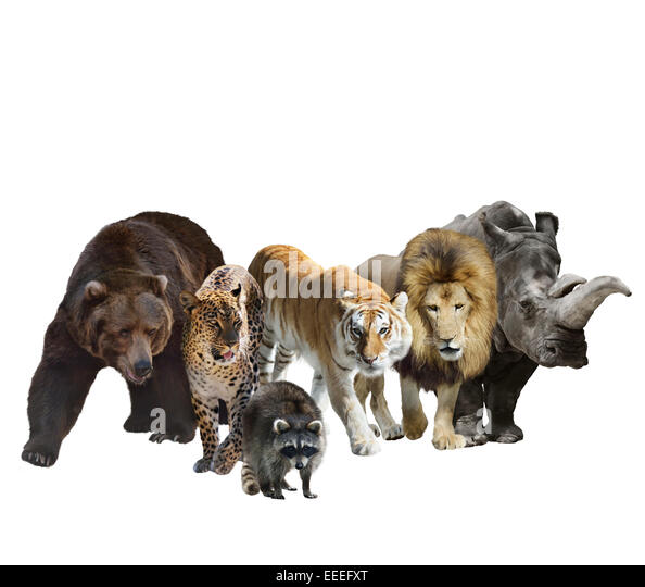 Digital Painting Of Wild Mammals Isolated On White Background - Stock Image
