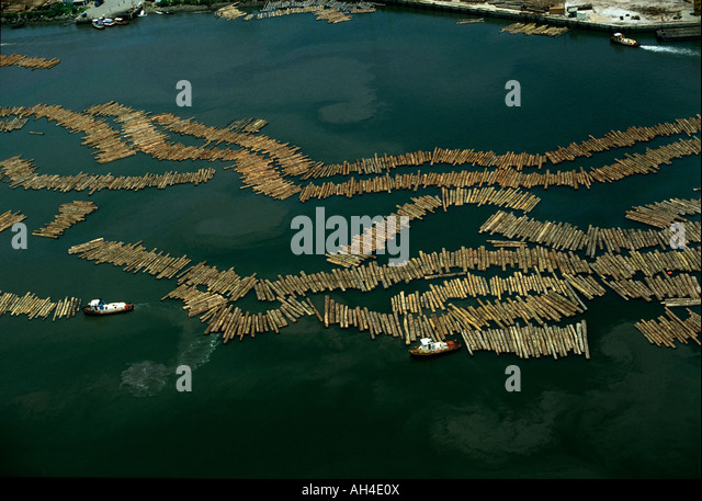 Deforestation: Timber at harbor at Owendo, Libreville harbor, Gabon, Africa - Stock Image