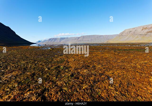 Dynjandi river foreshore,  Arnarfjord, Westfjords, Iceland, North Atlantic, Europe - Stock Image