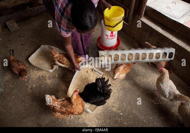 Chicken Farm Africa Stock Photos & Chicken Farm Africa ...