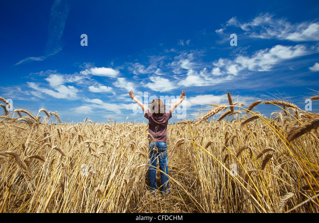 Happy boy in wheat filed, France, Europe - Stock Image