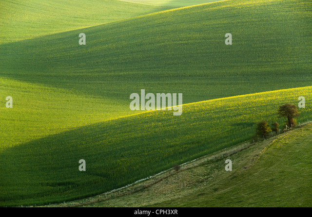 Spring morning in South Downs National Park near Falmer, England. - Stock Image