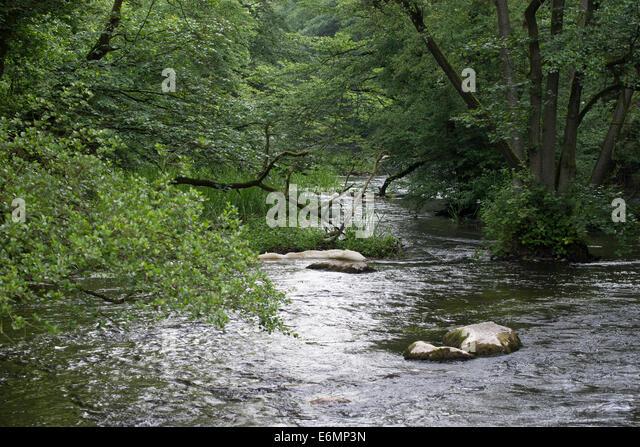 Brook, rivulet, stream, Bach, Tiefland-Bach, Naturnaher Bachlauf, Fluß, Fluss, Warnow, Mecklenburg-Vorpommern - Stock-Bilder