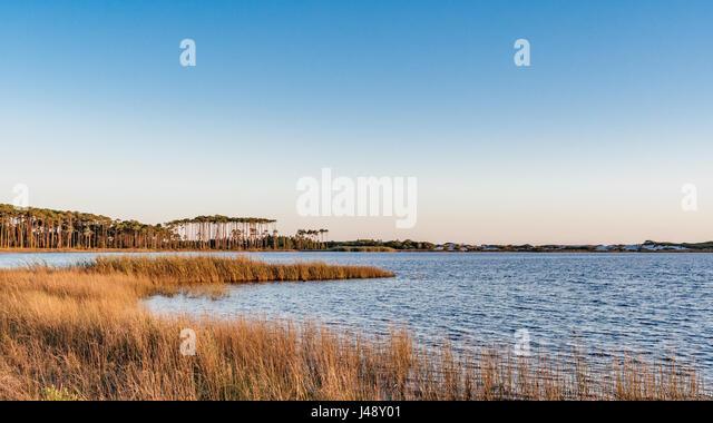 Longleaf pines on the far shore of Draper Lake, a coastal dune lake in Florida. - Stock Image