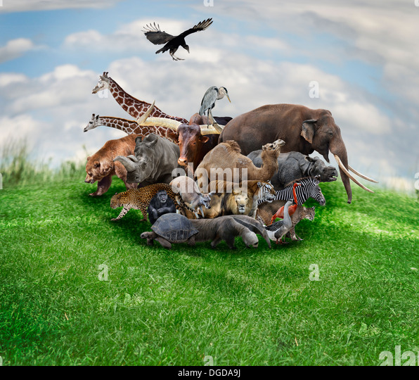 Wild Animals And Birds Collage - Stock Image