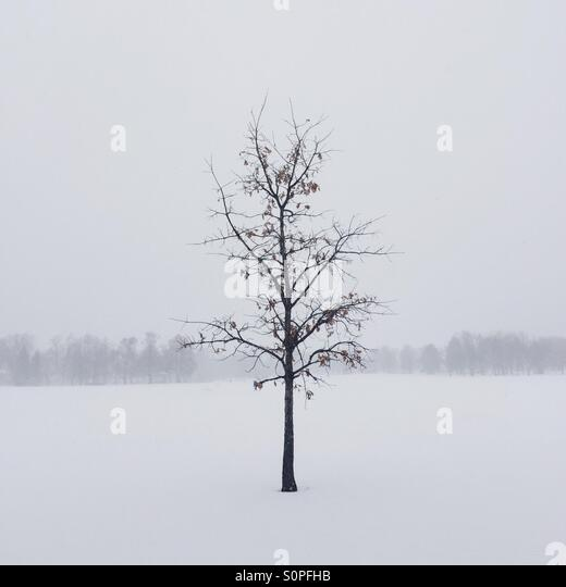 Almost winter. - Stock Image