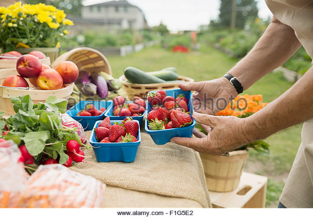 Farmer checking fresh strawberries at farmers market stall - Stock Image
