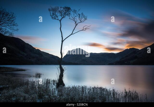 Lone tree in Buttermere in the English Lake District - Stock Image