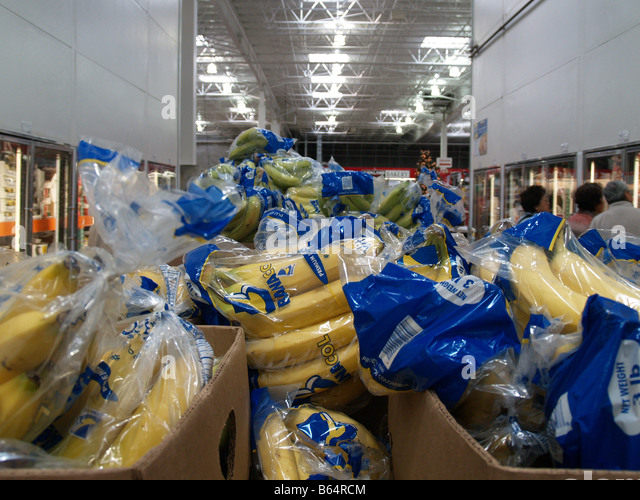 Bunches of bananas for sale in a costco wholesale big box store in the