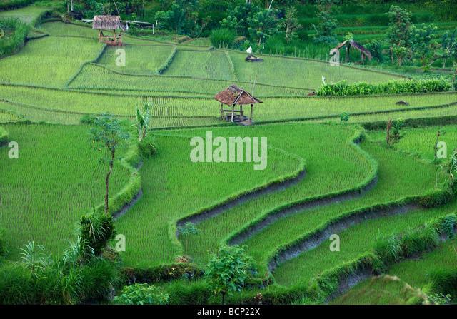 Rice terrace farming stock photos rice terrace farming for Terrace farming images