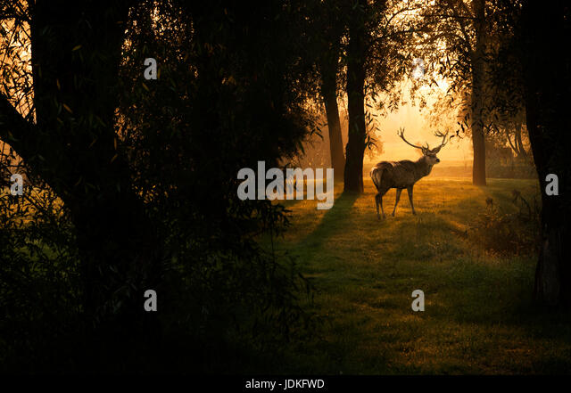 Deer in autumn forest - Stock Image