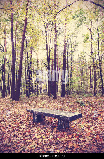 Vintage filtered picture of bench in a forest. - Stock-Bilder