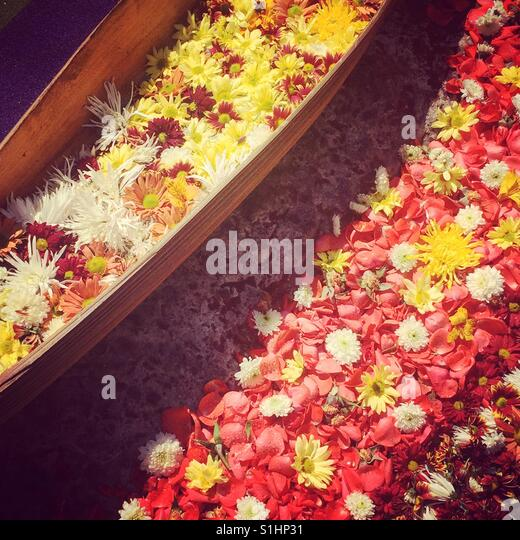Colorful flowers on Holy Week procession carpet in Antigua, Guatemala, Central America - Stock Image