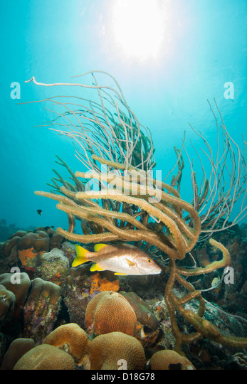 Fish and plant life at underwater reef - Stock Image