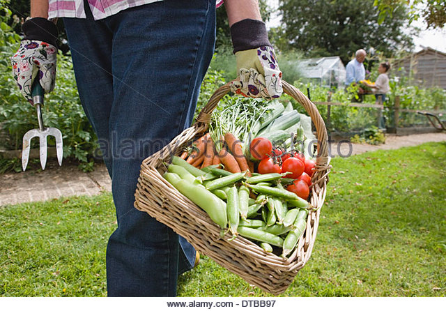 Close Up Of Grandmother With Basket Of Freshly Picked Vegetables - Stock Image