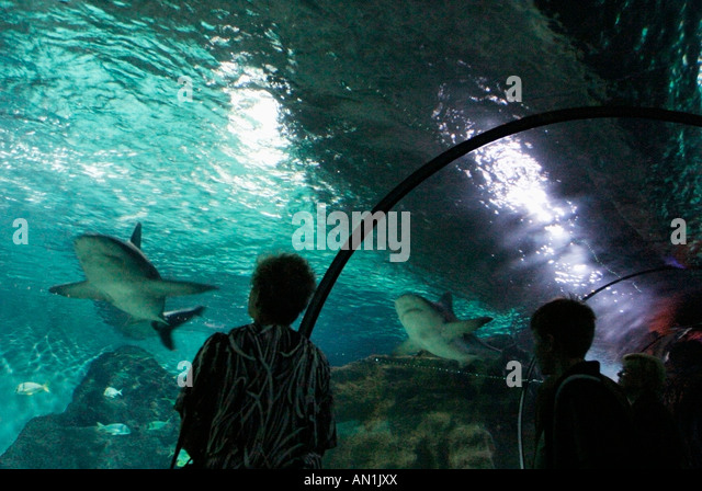 25 01 2004 Kanaren Teneriffa Loro Park Unterwasserwelt - Stock Image