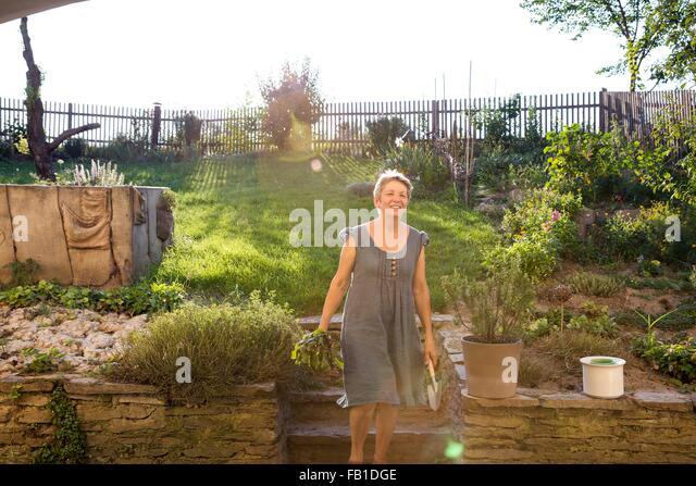 Mature woman gardening, digging up fresh vegetables - Stock Image