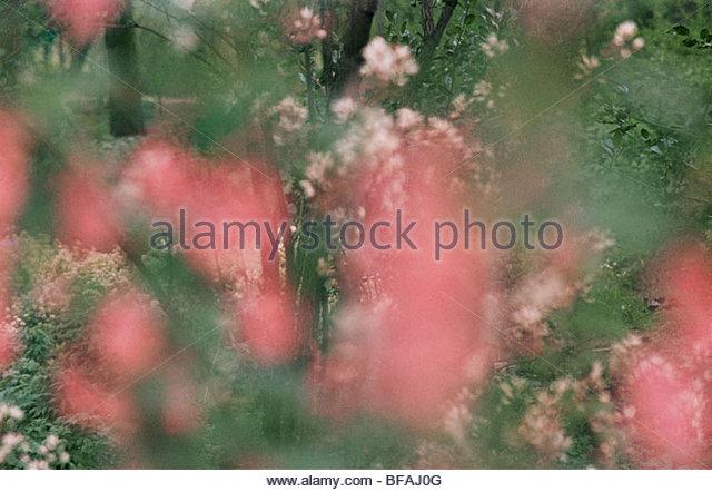 Spring impression, Netherlands - Stock Image