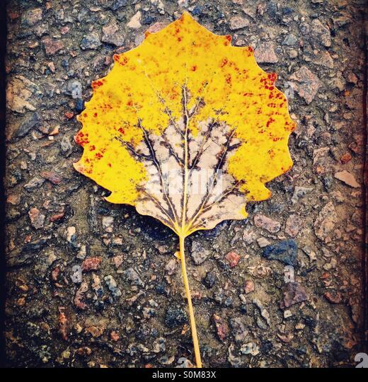 Yellow leaf - Stock Image