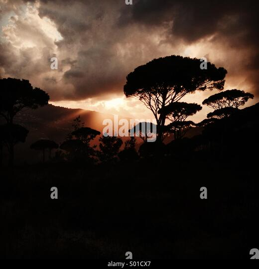 Amazing sunset behind the Pines in the mountains of Lebanon - Middle East - Stock Image