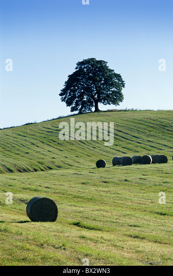 Agribusiness Agriculture Agronomy Bohemia Business Color Colour Crop Cultivation Culture Czech Republic Cze - Stock Image
