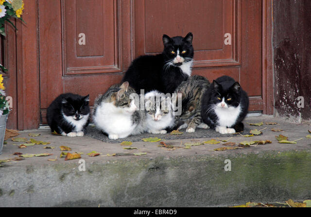 Domestic cats group outside stock photos domestic cats for Domestic front doors