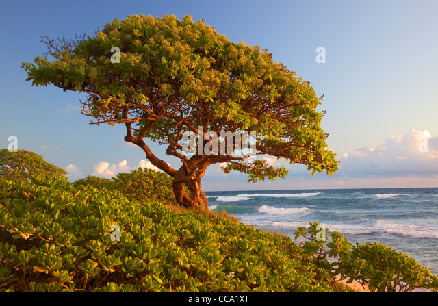 Nukoli'i Beach, also known as Kitchens Beach, Kauai, Hawaii. - Stock Image