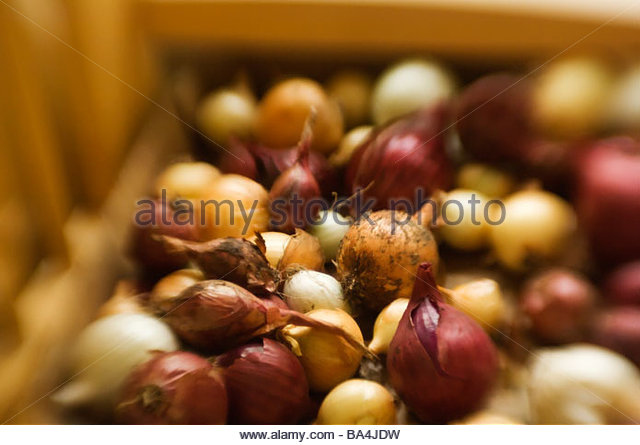 Close-up of onions and shallots - Stock Image