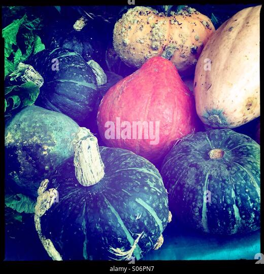 Winter squash - Stock Image